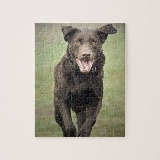 UK, England, Suffolk, Thetford Forest, Black dog Jigsaw Puzzle