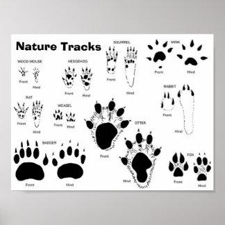 UK/Europe Animal Tracks Poster