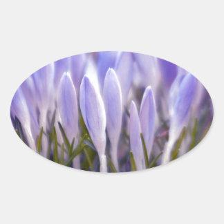 Ultra violet crocuses oval sticker
