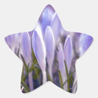 Ultra violet crocuses star sticker