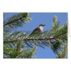 Umatilla National Forest  Fauna Birds Aves Animals Card