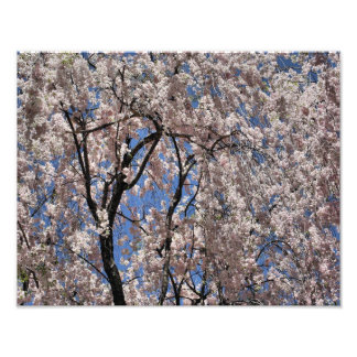 Umbrella Of Spring Blossoms 14x11 Flower Print Photo