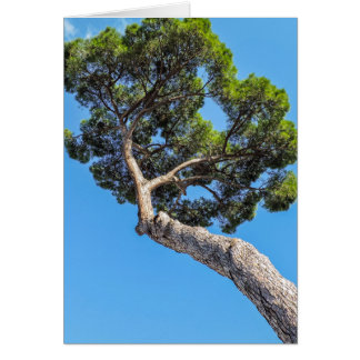 Umbrella Pine - Blank Greeting Card