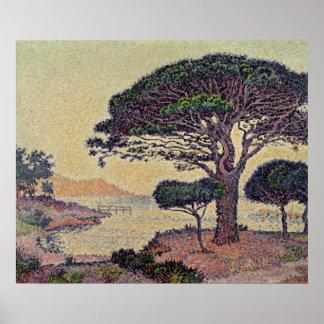 Umbrella Pines at Caroubiers, 1898 Poster
