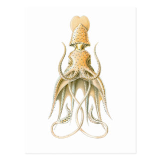Umbrella Squid Postcard
