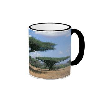 Umbrella Thorn Acacia (Acacia tortilis), Mkuze Ringer Mug