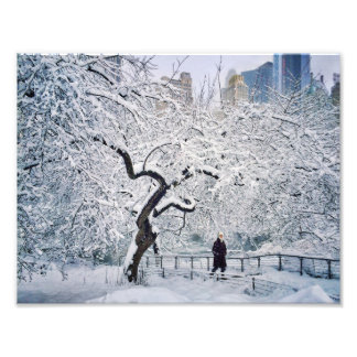 Under The Cover Of Snow Photo Print