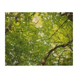 Under the Forest Canopy Wooden Wall Art