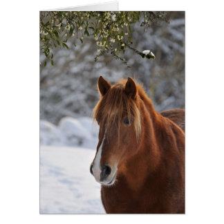 Under the mistletoe, horse Christmas Card
