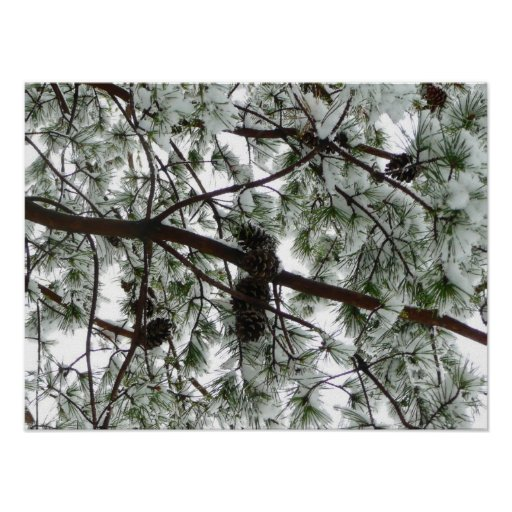 Underneath the Snow Covered Pine Print