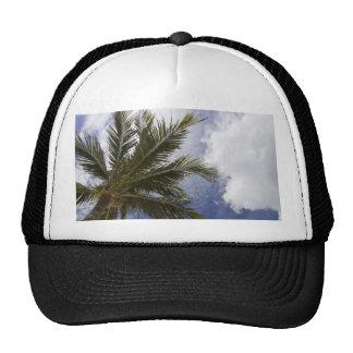 Underside of Palm Tree Trucker Hats