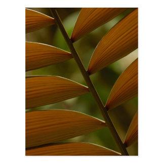 Understory palm detail. Mindo Cloud Forest. Postcard