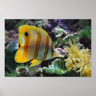 Underwater Adventure Poster