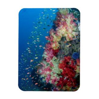 Underwater coral reef, Indonesia Magnet