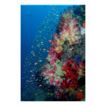 Underwater coral reef, Indonesia Poster
