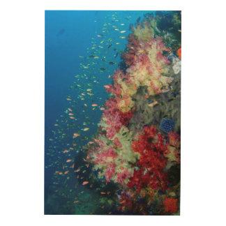 Underwater coral reef, Indonesia Wood Print