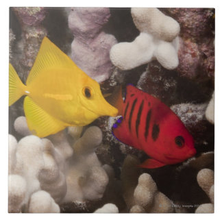 Underwater life; FISH: A Yellow Tang (Zebrasoma Tile