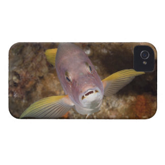 Underwater Life; FISH:  Close up portrait of a iPhone 4 Case-Mate Case