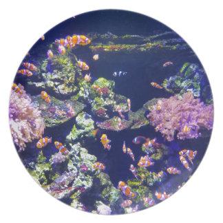 Underwater Orange Clown Fish Around Coral Plate