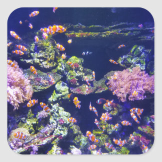 Underwater Orange Clown Fish Around Coral Square Sticker
