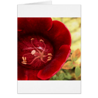underwater peace v1 greeting card
