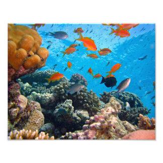 Underwater Scene Photo Print
