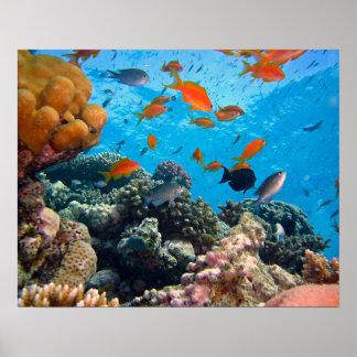Underwater Scene Poster