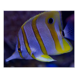 Underwater Sea Butterfly Fish Poster
