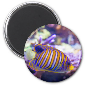 Underwater Sea Butterfly Yellow Fish 6 Cm Round Magnet