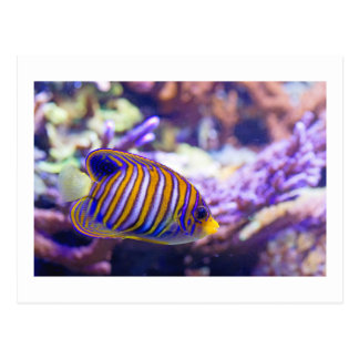 Underwater Sea Butterfly Yellow Fish Postcard
