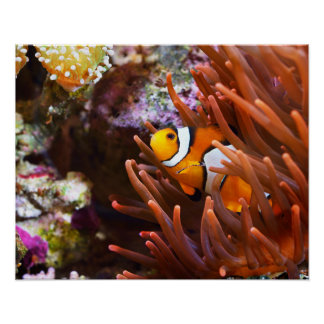 Underwater Sea Clownfish Wildlife Poster