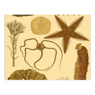 Underwater Sea Creatures Postcard