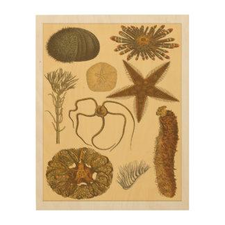 Underwater Sea Creatures Wood Print