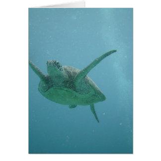 Underwater Sea Turtle Card