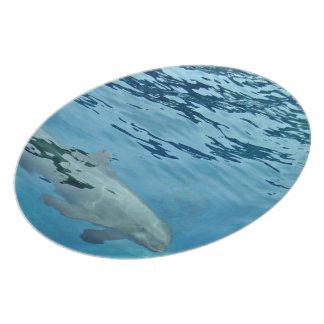 Underwater swimming dolphin dinner plates