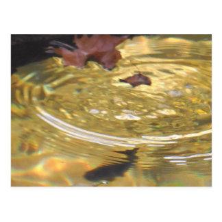 Underwater Trout feeding in Smoky Mountain creek Postcard