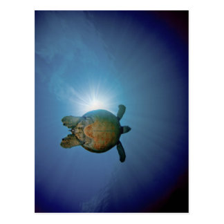 Underwater Turtle| Andaman Sea, Thailand Postcard
