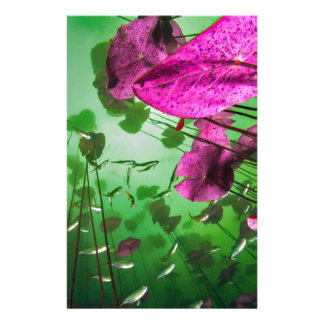 underwater view of Aktun Ha cenote near Tulum, Personalised Stationery