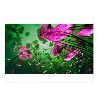 underwater view of Aktun Ha cenote near Tulum, Postcard