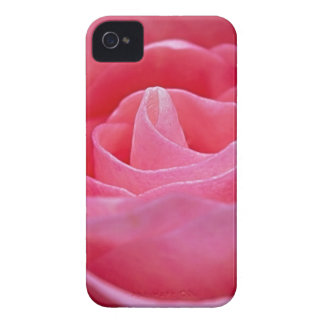 Unfurling Pink Rose Case-Mate iPhone 4 Cases