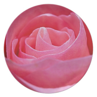 Unfurling Pink Rose Plate
