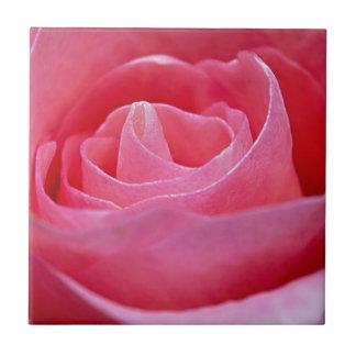 Unfurling Pink Rose Tile