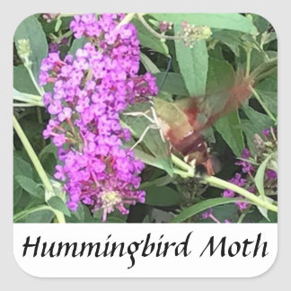 Unique looking insect Hummingbird Moth Stickers