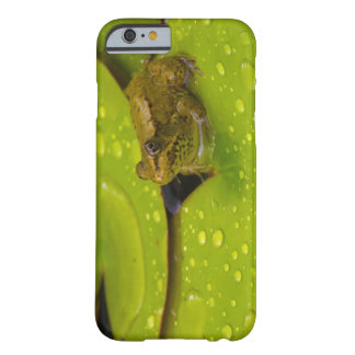 United States, Maryland, Westminster, Union 2 Barely There iPhone 6 Case