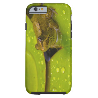United States, Maryland, Westminster, Union 2 Tough iPhone 6 Case
