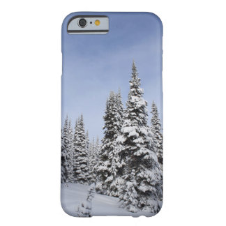 United States, Washington, snow covered trees Barely There iPhone 6 Case