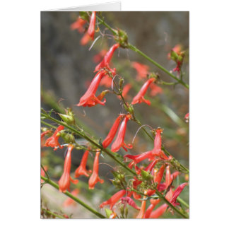 Unknown flowers, Kings Canyon/Sequoia Card