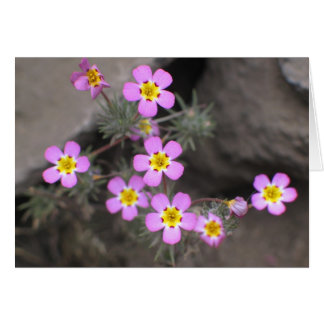 Unknown flowers, Sequoia National Park Card
