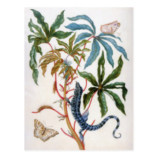 unknown title by Maria Sibylla Merian Postcard