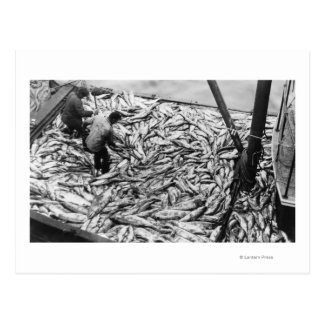 Unloading Salmon from Fishing Boats Photograph Postcard